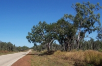 Typical stretch of Victoria Highway west of Katherine, NT